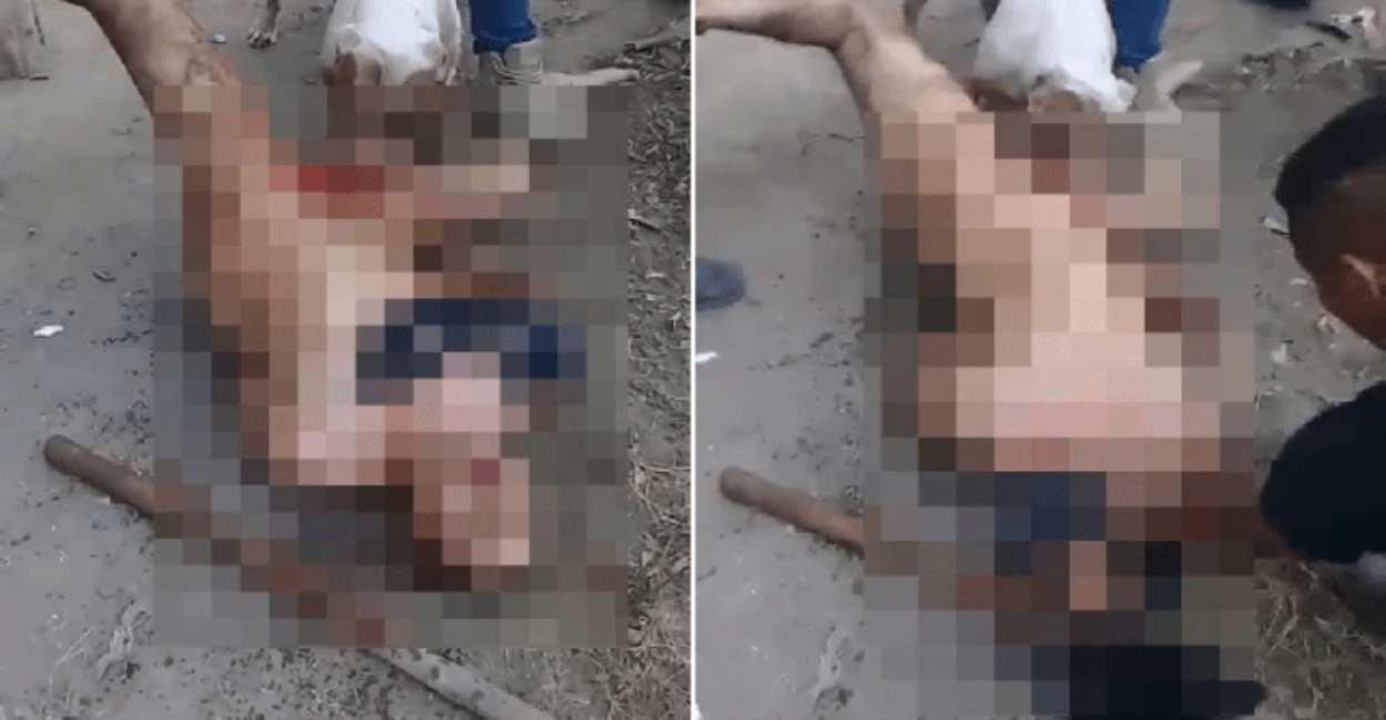 castrato pitbull stupro