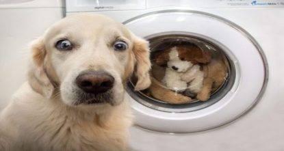 gracie cookie lavatrice