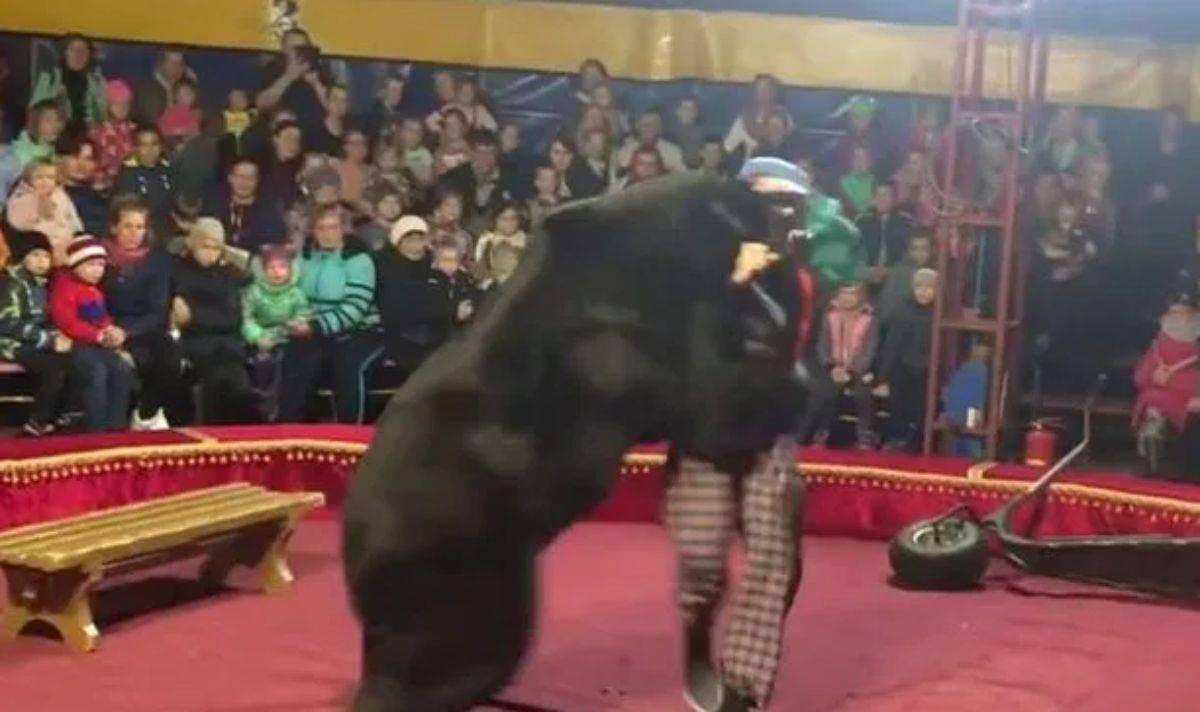 Circo orso aggredisce addestratore
