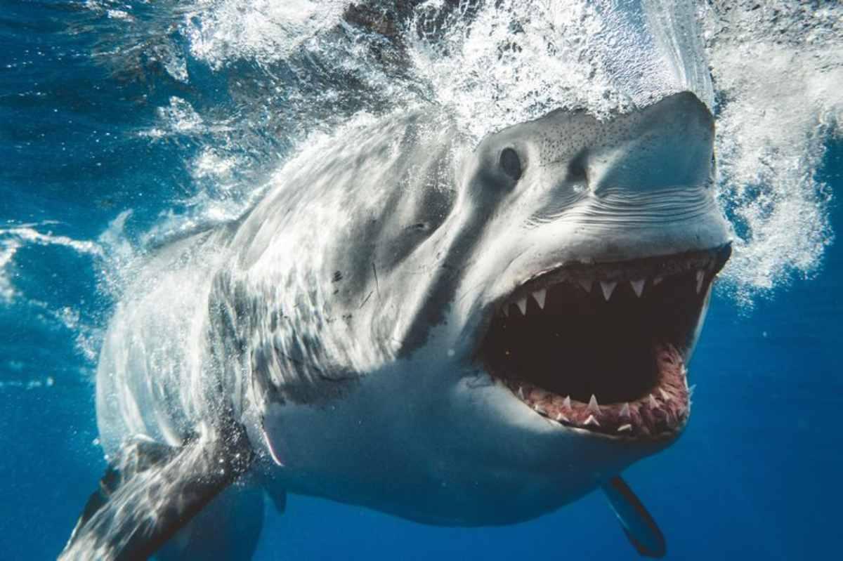 per scattare foto agli squali