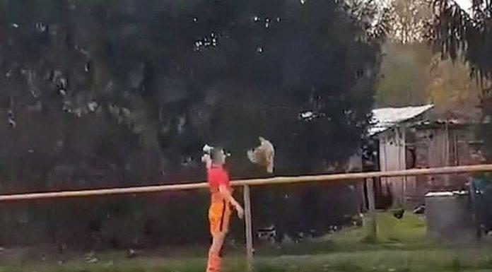 Calciatore uccide gallina