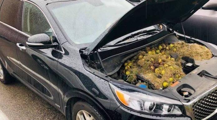cattivo odore auto