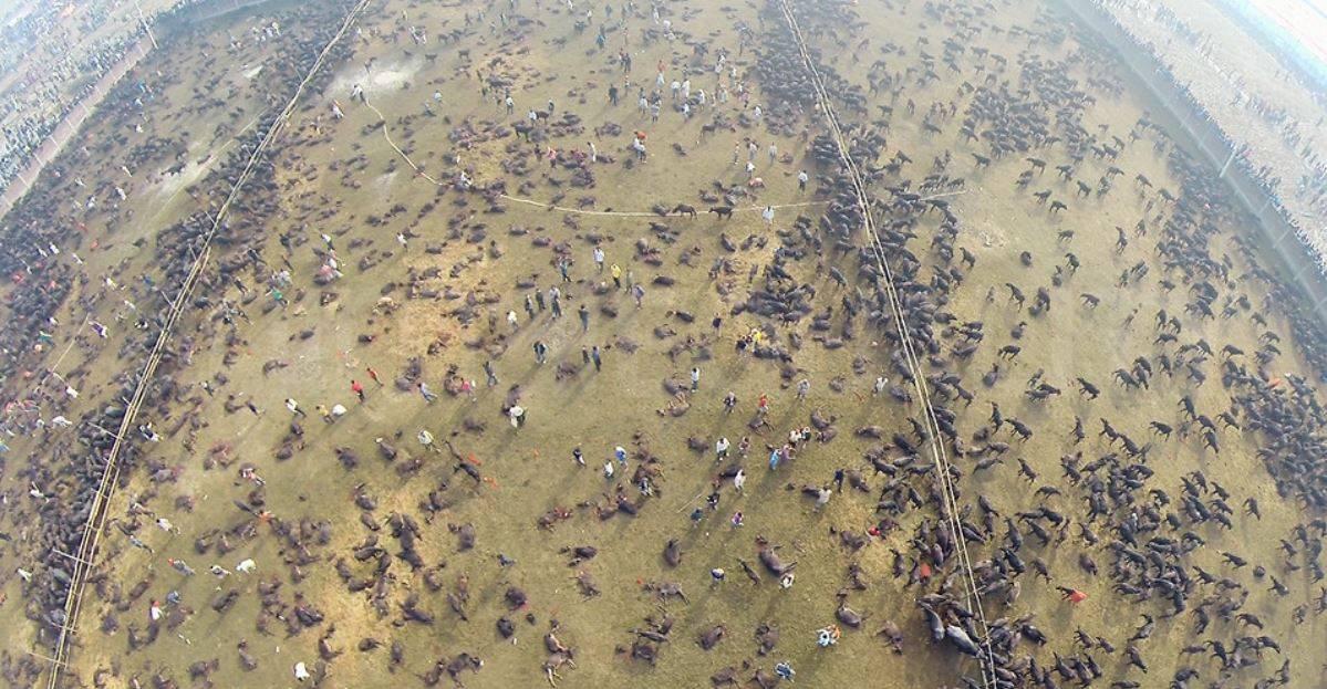 La peggiore mattanza al mondo: uccisi 300mila animali in sac