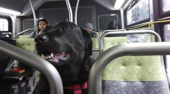 Cane prende solo autobus per il parco