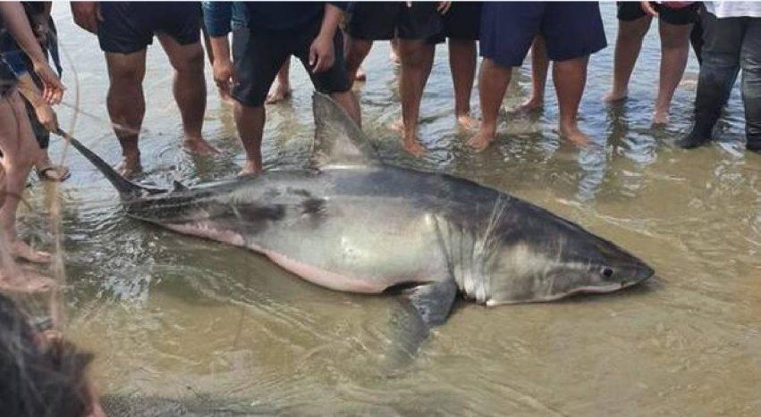 squalo ucciso su una spiaggia
