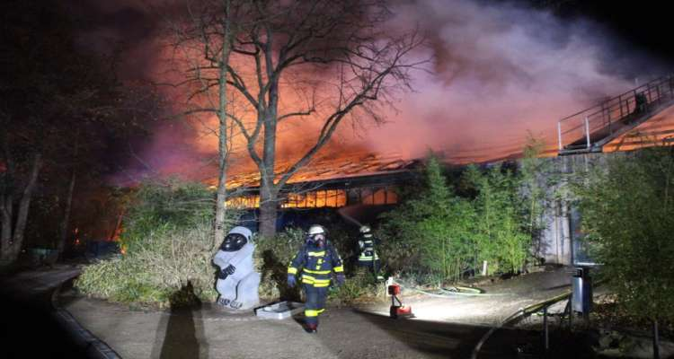 zoo incendio animali morti