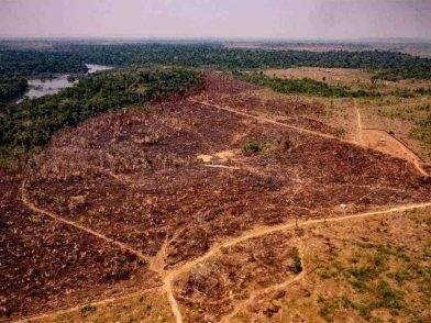 Deforestazione da record