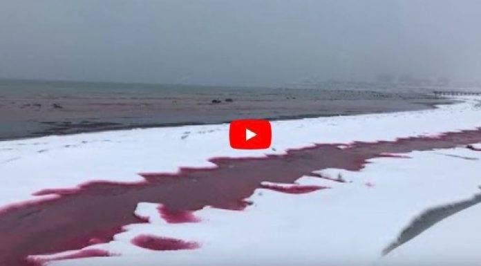 mar caspio costa si tinge di rosso