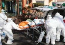 coronavirus cina animali morti
