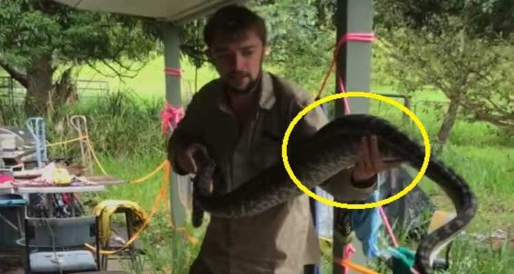 gatto serpente mangiato