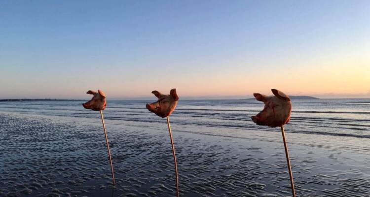teste di maiale spiaggia