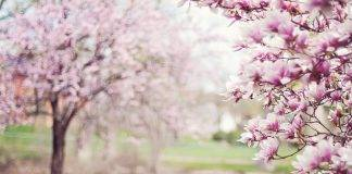 Meteo: è primavera, ma attenzione al gelo dalla Russia