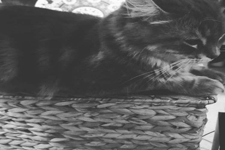 donna gatto accoltellato