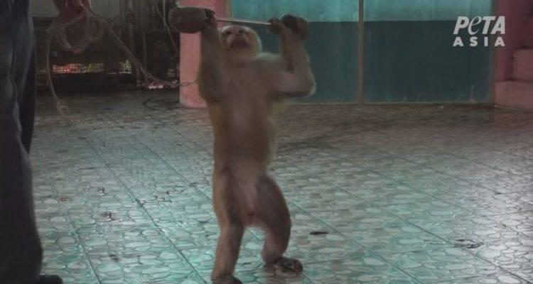 scimmie thailandia zoo