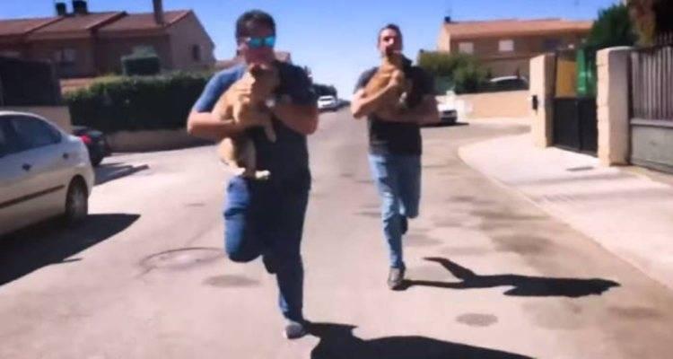 veterinario cani maltrattamenti