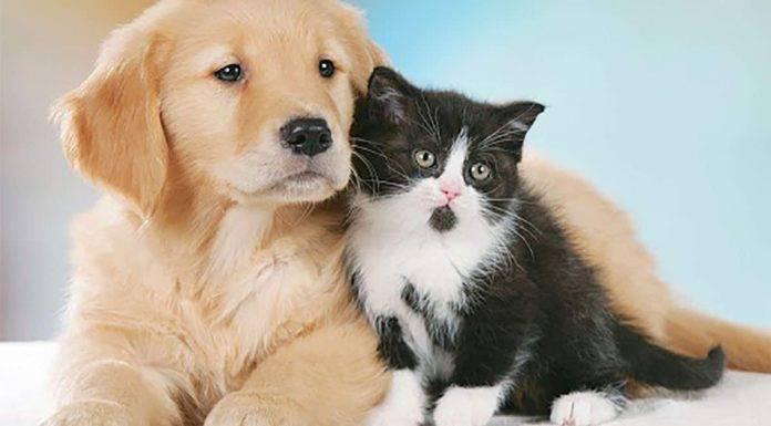 Coronavirus, Iss, cani e gatti