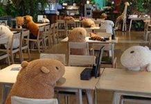 Giappone, animali di pezza a tavola per rispettare il distanziamento sociale