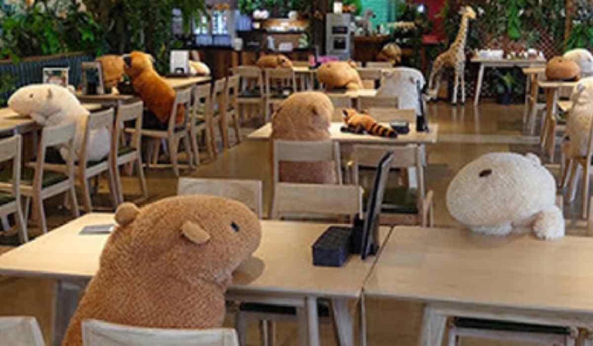 Giappone, animali di pezza seduti a tavola per far rispettare il distanziamento sociale – VIDEO