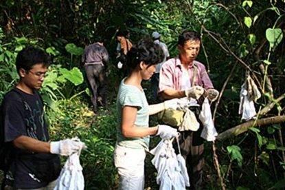 Ricercatori a Wuhan catturano pipistrelli senza precauzioni, la foto sparisce