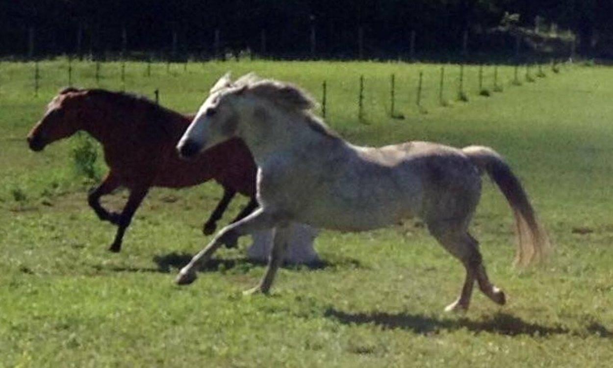 pony violenze