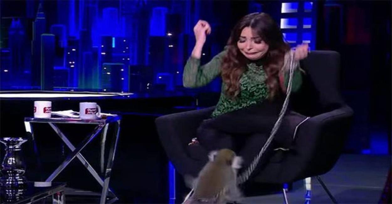 Scimmia aggredisce in diretta la presentatrice. Panico duran
