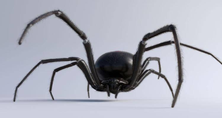 ragno fratellini morso spider-man