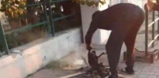 Livorno, senzatetto uccide e cucina gatto
