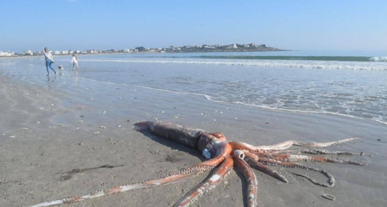 Calamaro gigante rinvenuto in spiaggia: la foto fa il giro del web