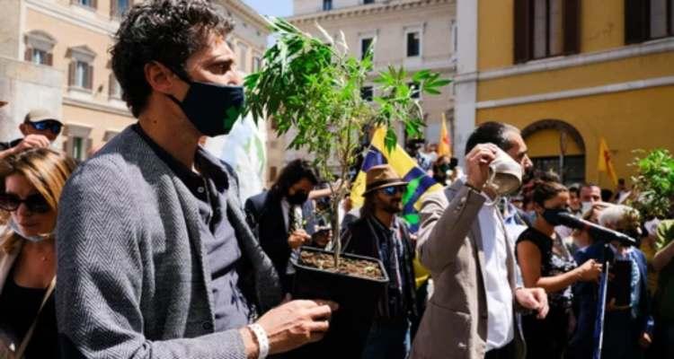 cannabis legalizzazione