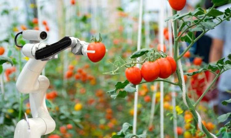 robot frutta verdura campi