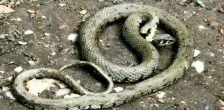 serpente uomo parco