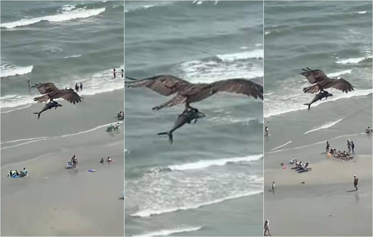 Aquila cattura squalo e il video diventa virale. Ma si tratt