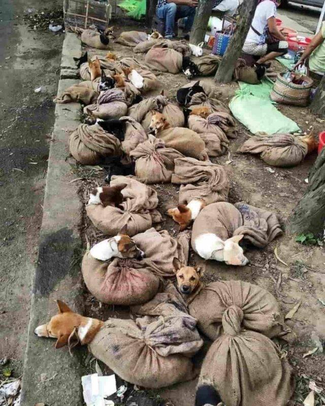 Cuccioli di cane condannati al mercato alimentare