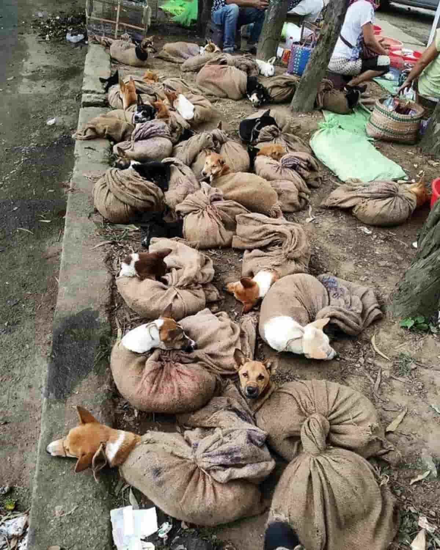 La foto dei cuccioli al macello diventa virale: Stato dell'I