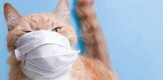 Regno Unito, gatto positivo al Coronavirus