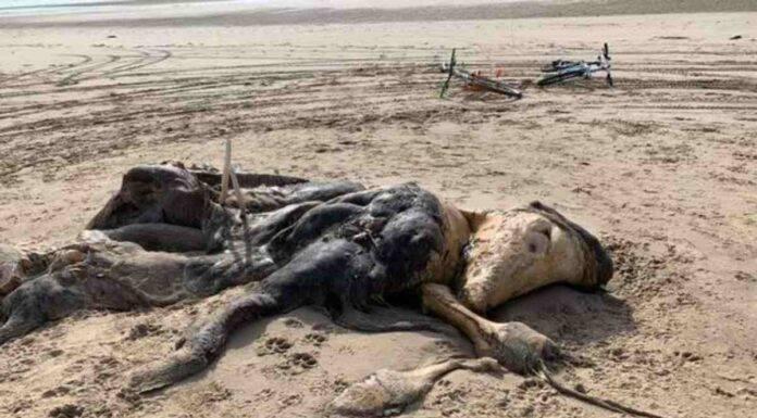 creatura ainsdale spiaggia