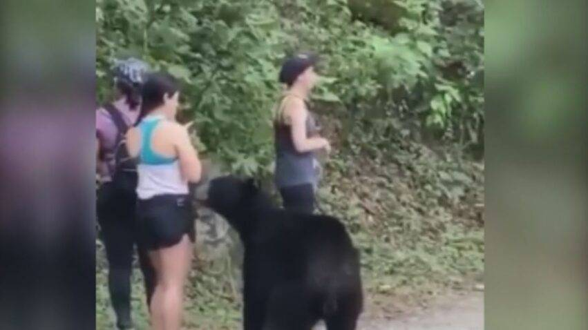 si è scattata un selfie con l'animale