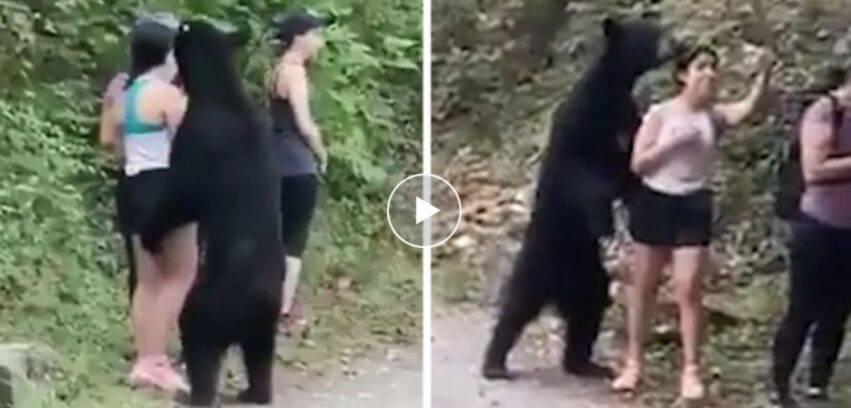 faccia a faccia con l'orso