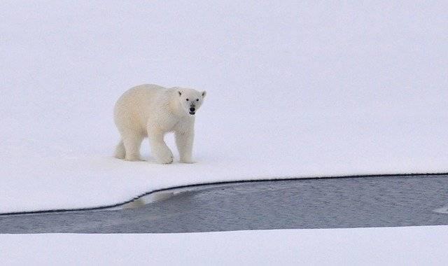 """Gli orsi in Trentino vivono uno """"stress psico fisico molto severo"""" e """"M49 non mangia"""": ecco il rapporto sul recinto dove sono rinchiusi"""