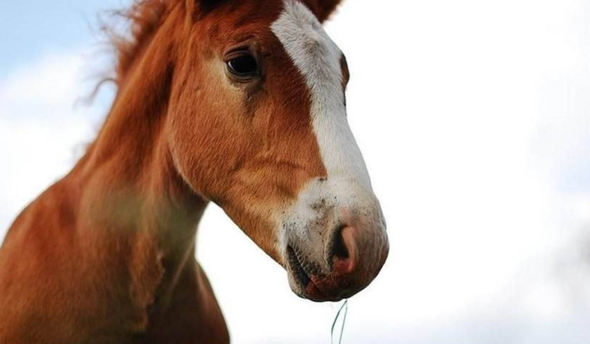Grecia, vietata la macellazione dei cavalli : ecco cosa prevede la legge – VIDEO