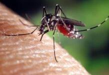 zanzara killer asiatica