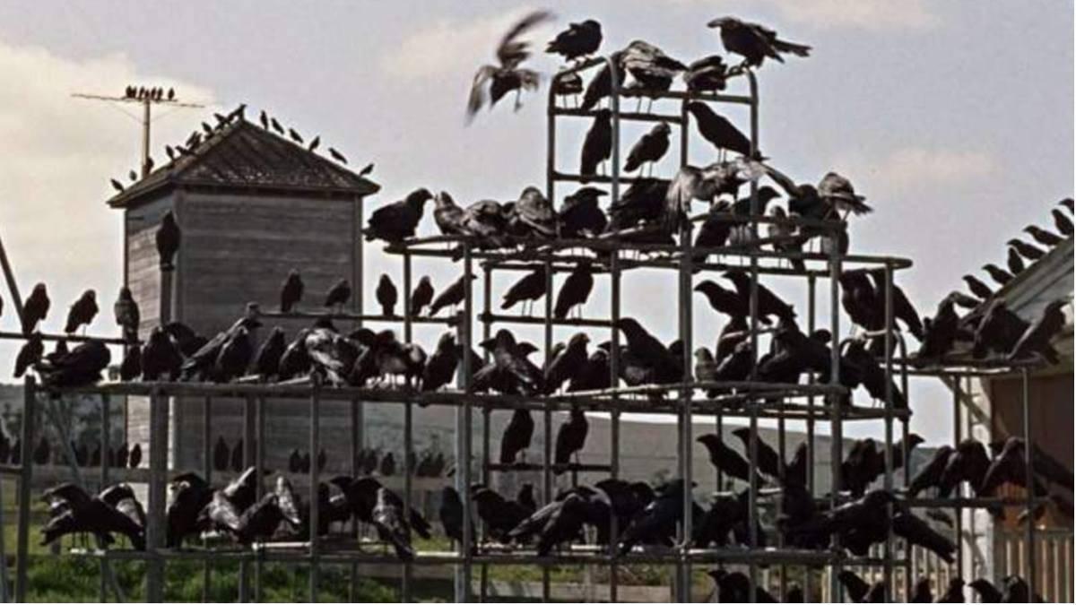 Quello che c'è da sapere su Gli Uccelli, grande classico di Hitchcock: trama e curiosità
