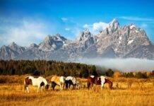 Wyoming, fa sesso con due cavalli-min