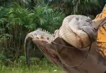 decapitato e seppellito un coccodrillo considerato un demone