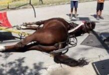 morto cavallo