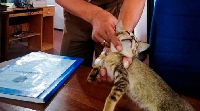 Il gatto corriere arrestato