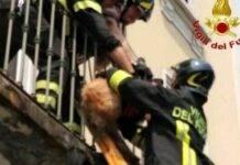cane lasciato sul balcone