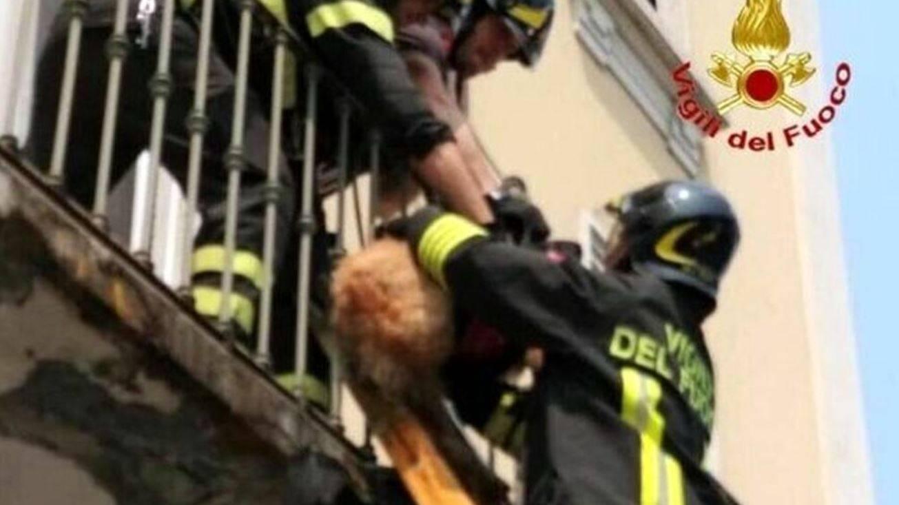 Lasciano il cane sul balcone per 2 giorni a 40 gradi senza acqua |  è gravissimo