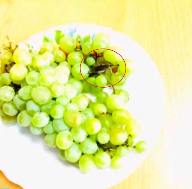 Lo scorpione nell'uva