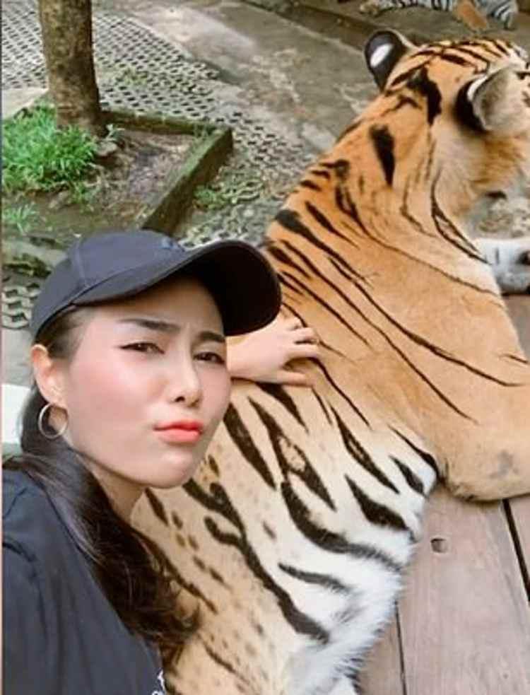 Waraschaya tigre zoo
